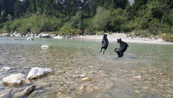 Urlaub mit dem Hund in Kärnten